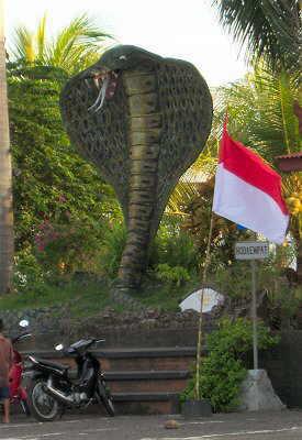 Riesenkobra auf dem Parkplatz von Soka Indah